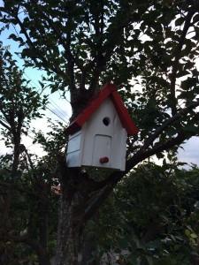 当院の巣箱の色塗り完成