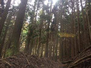 矢筈山道程12015年